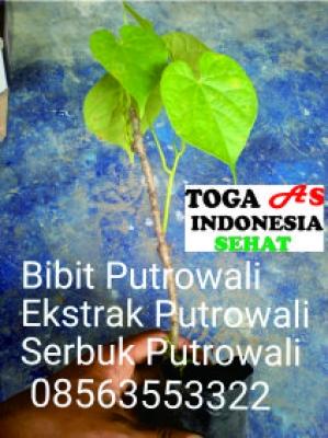 Info produk lain pasang Aplikasi Toga As Indonesia Sehat