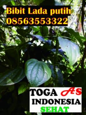 Info produk kami lainnya web. togaasindonesia.com  atau pasang Aplikasi Toga As Indonesia  Sehat