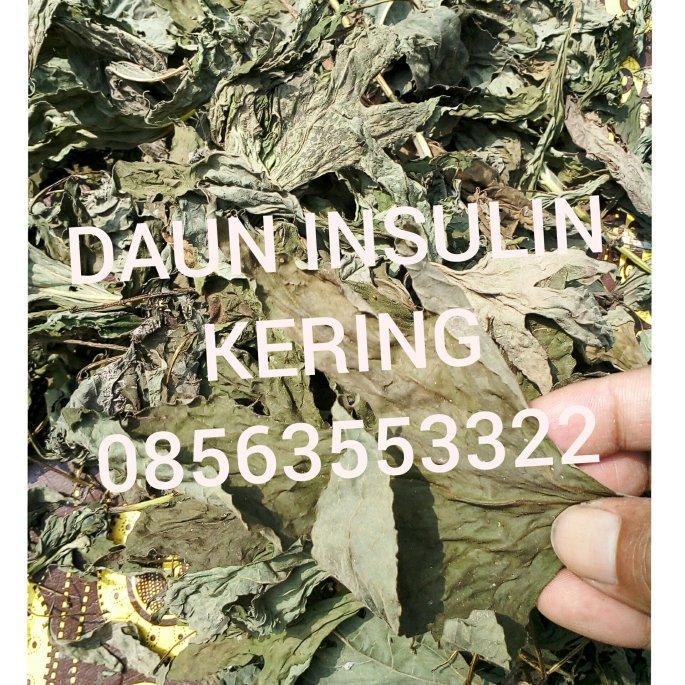 Jual daun insulin kering dan juga segar maupun bibitnya